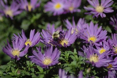 The Garden 2007