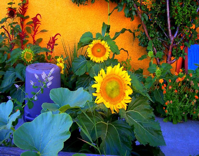 Sunflowers golden1.JPG