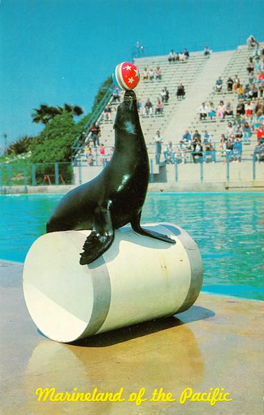 Seal Circus Time