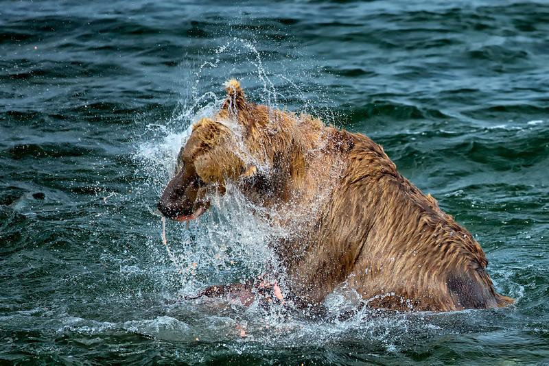 Alaska_2013_FH0T9603.jpg