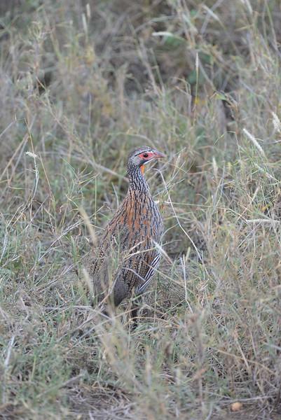 East Africa Safari 356.jpg