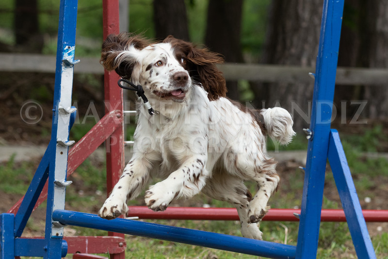 Dogs-7934.jpg