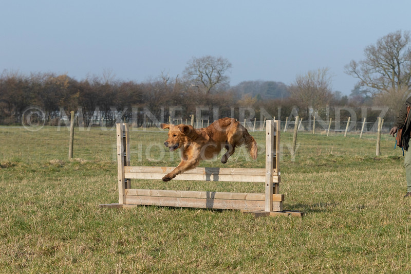 Dog Training Novice GD Feb2019-5958.jpg