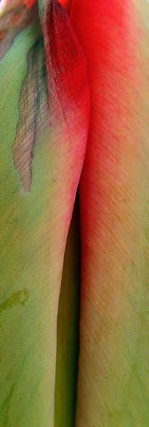 Vertical Tulip