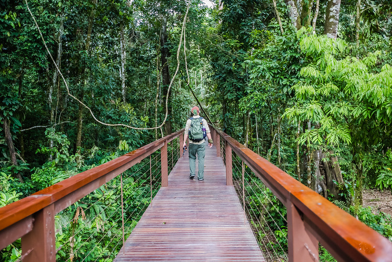Hiker in the Amazon Jungle