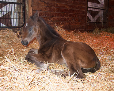 Trail Princess & Foal (2-21-14)