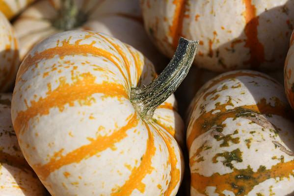 Pumpkin Picking 09.09