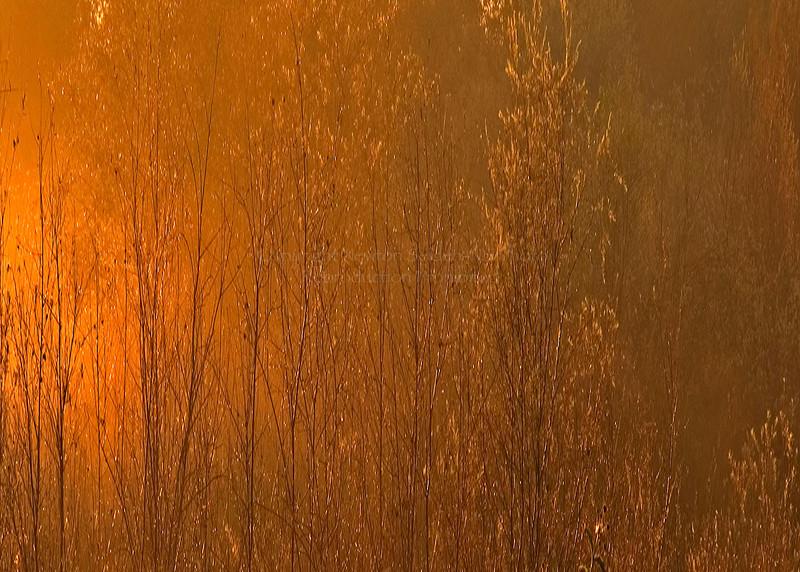 Golden Sunrise Madera, California