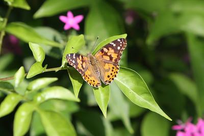 May 10, 2012 Butterfly Garden Dedication