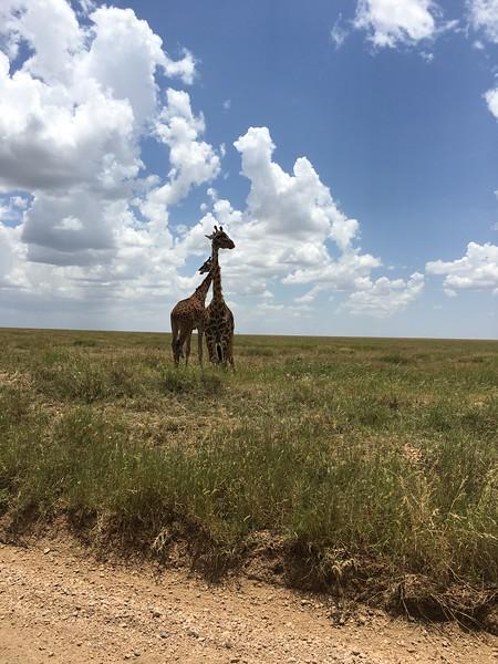 Tanzania Spring 2019 Mega Terra