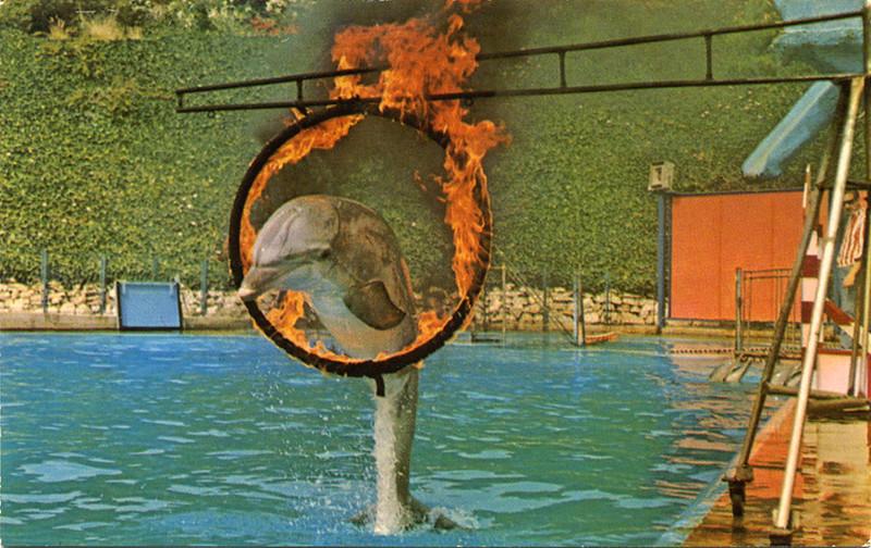 Fire Hoop Jump