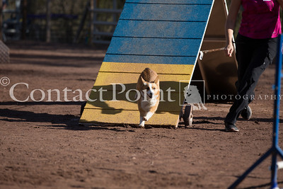 Contact Point AKC Agility Trial - February 16, 2013