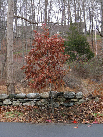 WLC website - trees