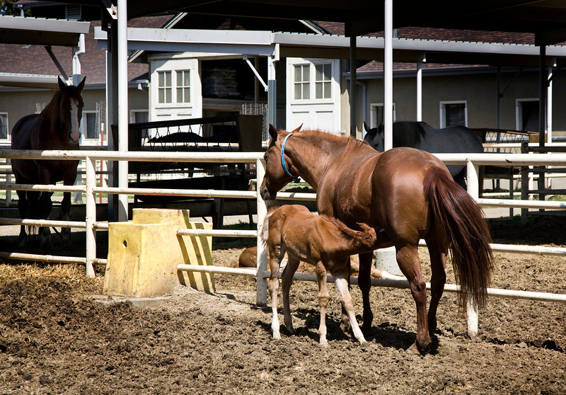 davis_horses.jpg