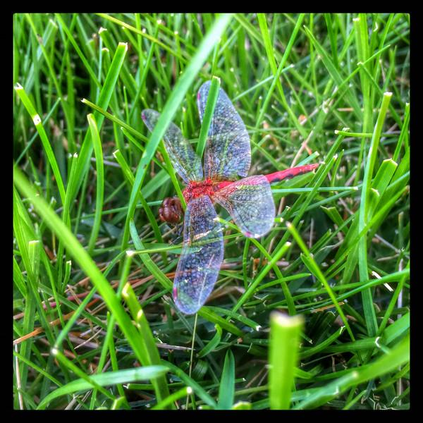 Fly! II