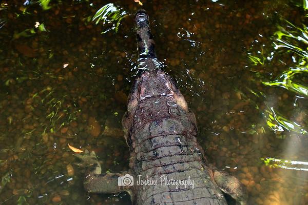 2012-06-24 Singapore Zoo Visit