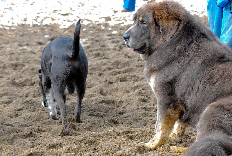 dogs_beach-031.jpg