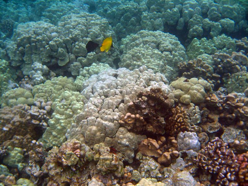459- 20080416- Hawaii 20-Snorkelling IMG_0647.jpg
