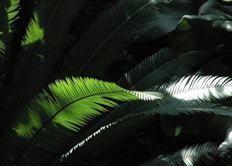 fern5x7color.jpg
