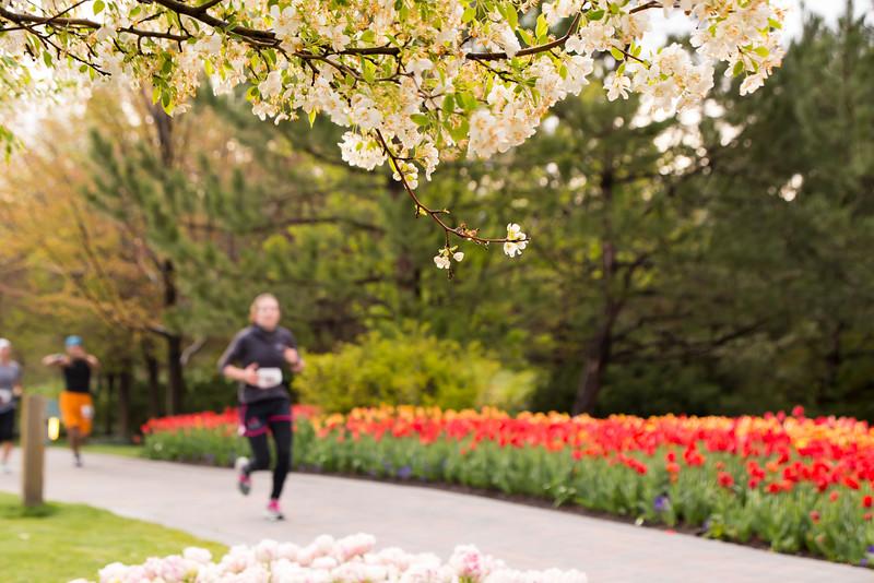 TulipFestHalfMarathon_Runners_Gardens_2015_IMG_4679.jpg