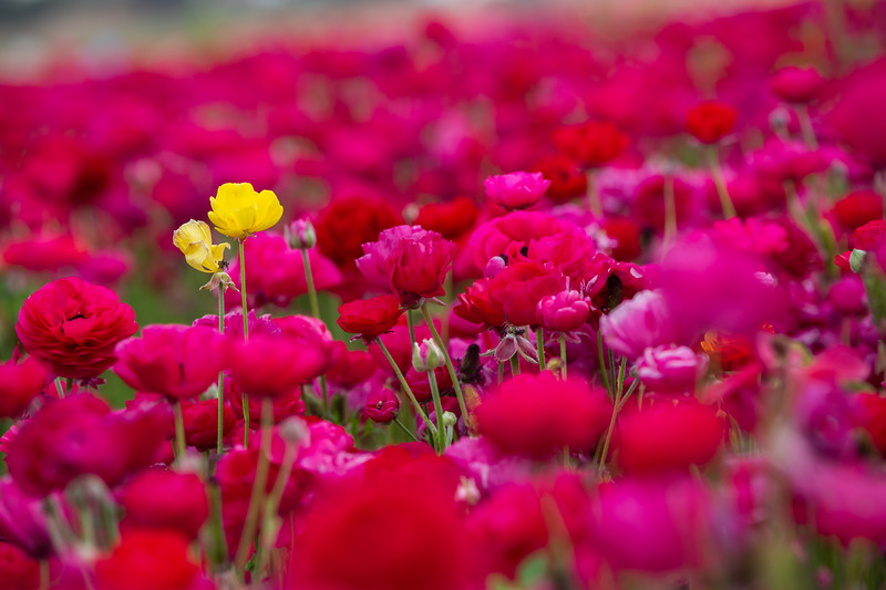 Spring Flowers B-366.jpg