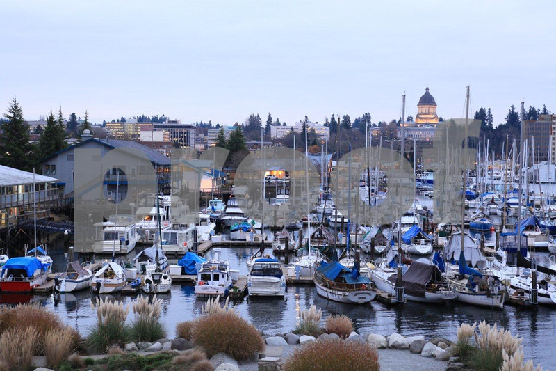 The Capitol and Fiddlehead Marina in Olympia, WA.