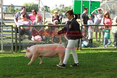 2013 LHVCF Swine