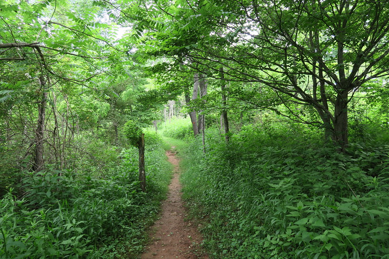 Hickory Trail