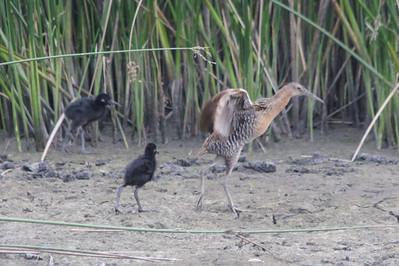 2011 Bird (3) - Jul-Sep