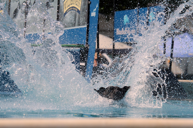 Dock Dogs at Fair-128.JPG
