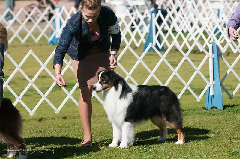 20170205_Australian Shepherds_Lost Dutchman Kennel Club-83.jpg