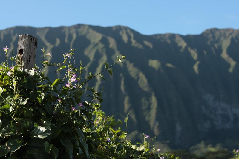 Hawaii mountains.