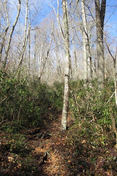 Little Green Trail - 3,800'
