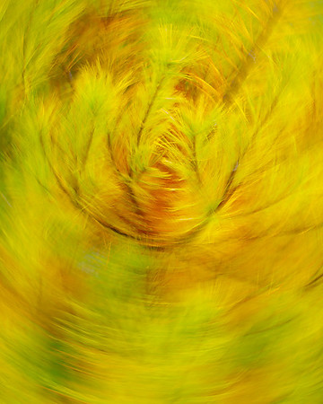 Swirls of Nature