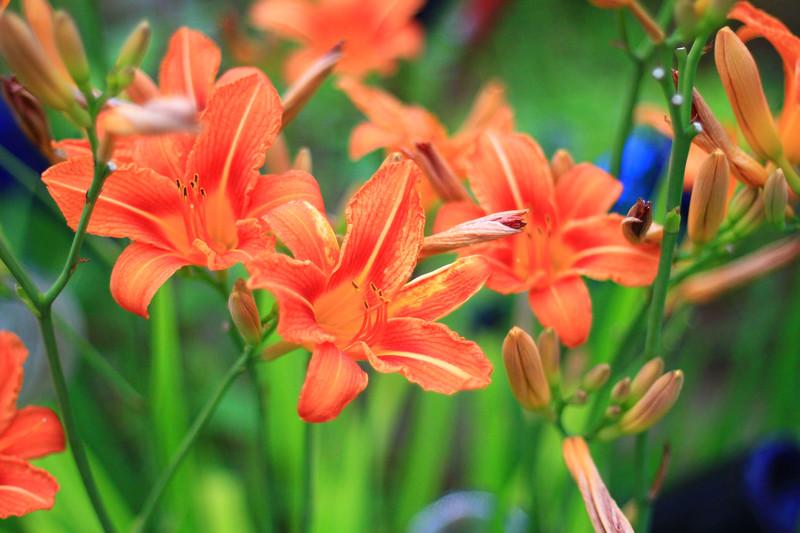 debbies flowers 2019-1322-2.jpg