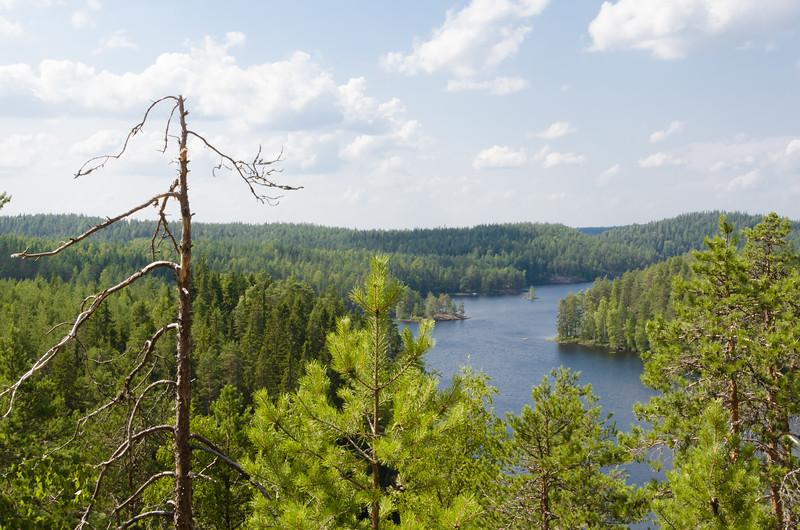 Woods_Finland-10.jpg