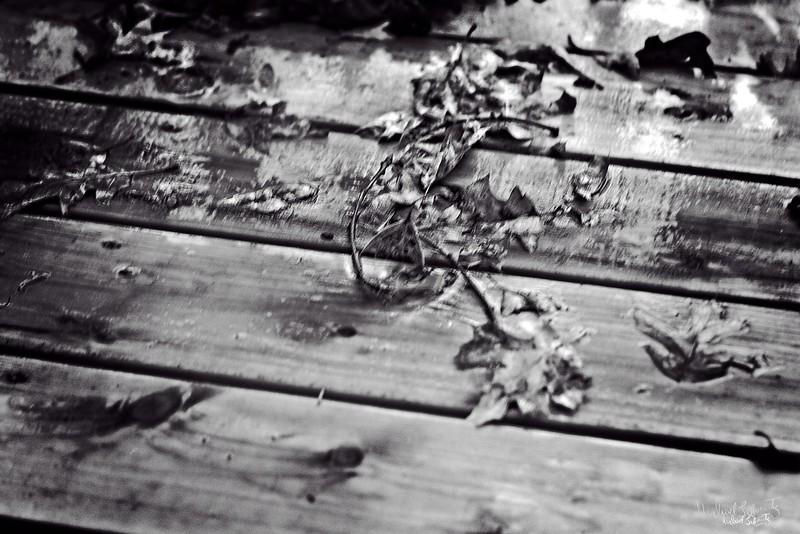 fallen leaves2018#3rain on the deck bw_L_12509 copy