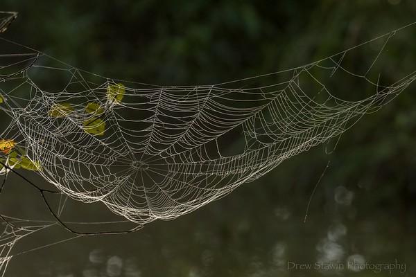Chattahoochee Walk - 7/18/19 webs