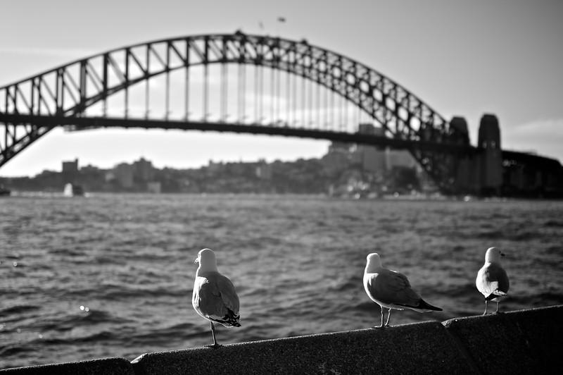 2011-07-12_Sydney-Market_Copyright_David_Brewster__76