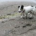farley pups 029-2.jpg