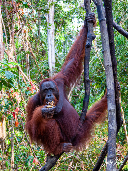 2012.10.07_Borneo_DSC_6922-Edit-Juno Kim.jpg