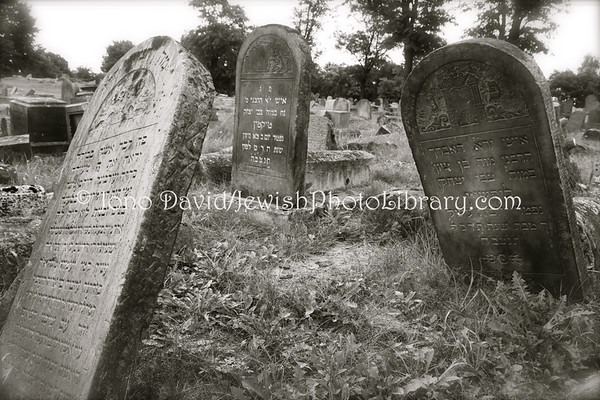 POLAND, Bialystok. Jewish Cemetery. (9.2011)