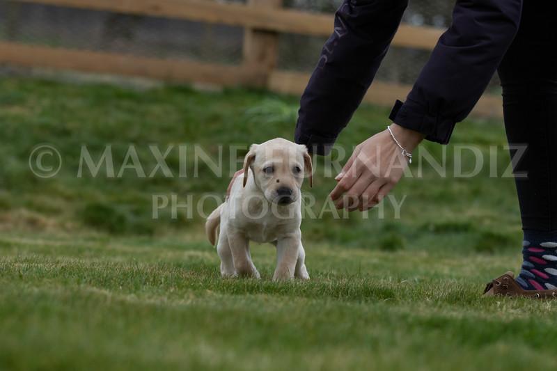 Weika Puppies 24 March 2019-6694.jpg