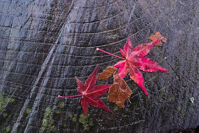 2012 Japan Autumn