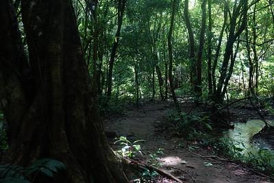 Corcovado Ntl Park