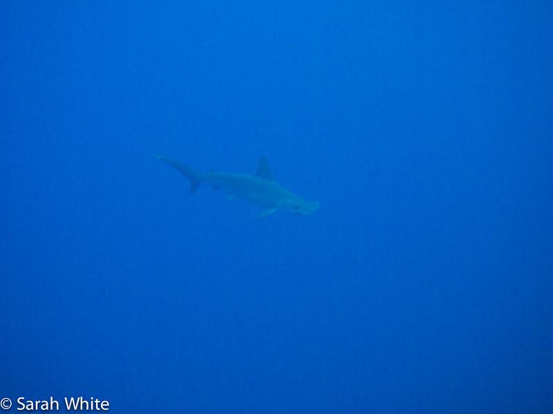 Project Shark 2013-137.jpg