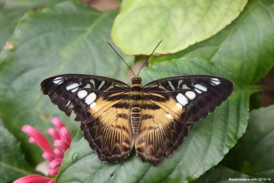 Butterflies & Moths. Set 3