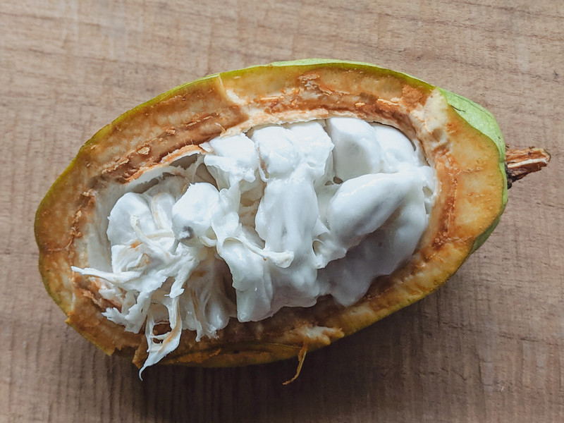 costa rica cacao-4.jpg