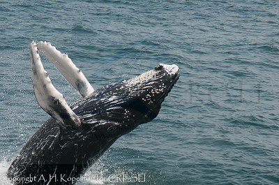 Best of the 2012 Whale Watch Season