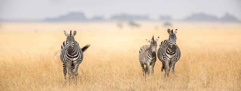 Zebras and kopjes, Serengeti National Park